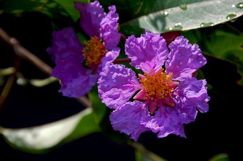 Meer_bloemetjes