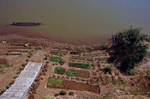 Mekong_garden